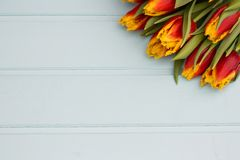 Red and yellow tulips lying in a row on pastel background with place for text. Spring concept. Flat lay, top view. stock photo