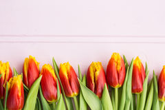 Red and yellow tulips lying in a row on pastel background with place for text. Spring concept. Flat lay, top view. Red and yellow tulips lying in a row on Stock Images