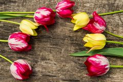 Red and yellow tulips on rustic wooden background Royalty Free Stock Photo