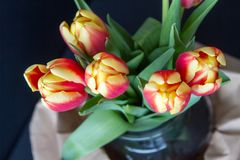 Red and yellow tulips in a vase from above. Close-up of a beautiful red and yellow tulips in a vase over a dark background seen from above Royalty Free Stock Photo