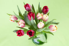 Red and yellow tulips in a vase Royalty Free Stock Photos