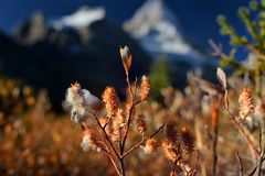 Red , yellow vegetation in Rockies in The fall. In foreground red , yellow , orange vegetation and blue snow covered mountains in background Stock Photography