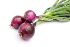 Red young onions Stock Photography