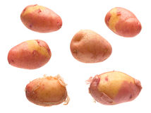 Red young potato collection Royalty Free Stock Photos