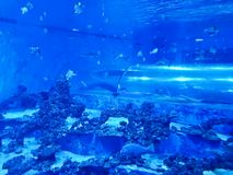 Reda Poland Aquapark - tubo subacuático de la diapositiva con los tiburones y los pescados exóticos Fotografía de archivo