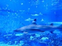Reda Poland Aquapark - underwater slide tube with sharks and exotic fish. Reda, Poland 2018: interior of Reda Aquapark, main attraction - transparent tube slide Stock Images