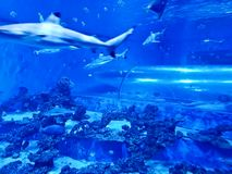 Reda Poland Aquapark - underwater slide tube with sharks and exotic fish. Reda, Poland 2018: interior of Reda Aquapark, main attraction - transparent tube slide Stock Photo