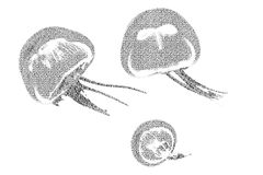 Redacte las medusas mezcladas para ser figura de medusas, con tipografía stock de ilustración