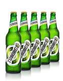 Redakcyjna fotografia pięć zimnych butelek Tuborg zieleni piwo z kroplami odizolowywać na bielu Zdjęcie Royalty Free
