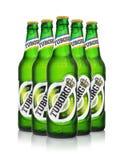 Redakcyjna fotografia pięć zimnych butelek Tuborg zieleni piwo z kroplami odizolowywać na bielu Zdjęcia Royalty Free