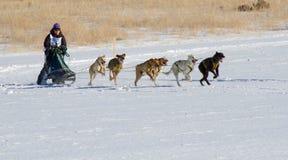 Redaktörs- kvinnlig konkurrent Rocky Mountain Sled Do Royaltyfria Foton