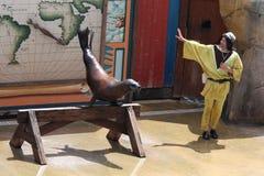 redaktörs- lion som utför havsbruk zoomarine1 Royaltyfri Foto