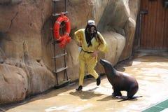 redaktörs- lion som utför havsbruk zoomarine18 Royaltyfria Bilder