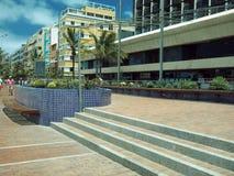 Redaktioneller Kaktusgarten auf Fußgängerpromenade Playa de Cantera Lizenzfreies Stockbild