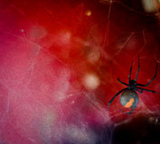 Redback in red Stock Image