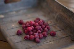 Redberries obrazy stock