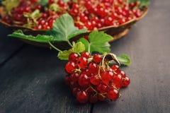 Redberries ancora sul ramo, più in un fondo Fotografie Stock