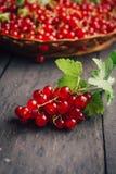 Redberries ancora sul ramo, più in un fondo Fotografie Stock Libere da Diritti