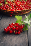 Redberries still on branch, more in a background. Redberries, currants, fresh, still on branch, more in a background Royalty Free Stock Photos