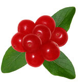 Redberry och leaves royaltyfria foton