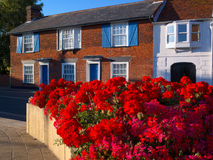 Redbrick house and geraniums Stock Photo