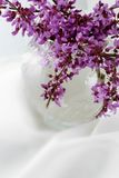 Redbud Blossoms with a Dreamy Background. Redbud blossoms in a vase against a snowy white background Stock Images