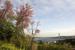 Redbud and Istanbul. A sceene including Redbud trees  from Bosphorus of Istanbul Turkey Stock Images