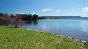 Redbud, Lake and Mountain Royalty Free Stock Image