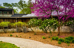 Redbud tree and bushes at the Nature Center in Wildwood Park, Ha Royalty Free Stock Images