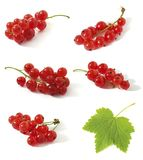 Redcurrant. Group of Red currant isolated on white background stock image