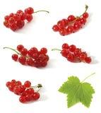 Redcurrant Stock Image