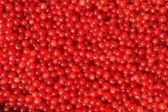 Redcurrant Royalty Free Stock Photos