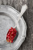 Redcurrant Royalty Free Stock Photography