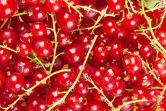 Redcurrant Stock Photos