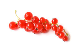 Redcurrant Royalty Free Stock Photo