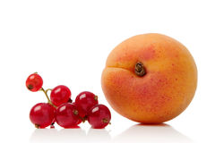 Redcurrant and apricot. Isolated over white background Royalty Free Stock Photo