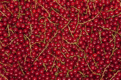 Redcurrant background Royalty Free Stock Images