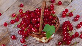 Redcurrant in basket on brown wooden table rotating stock video