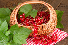 Redcurrant in basket on red checkered tablecloth Stock Photos