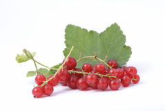 Redcurrant berries Royalty Free Stock Images