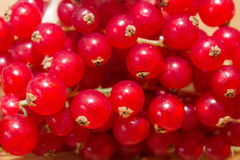 Redcurrant berries close up texture background. Red currant berries. Fresh red summer berries. Ripe red currants top view Stock Images