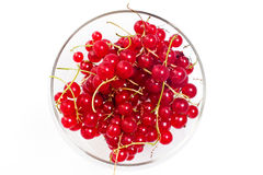 Redcurrant berries in a glass bowl Stock Photography