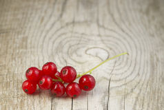 Redcurrant berries Stock Images