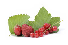Redcurrant berries and Strawberries Royalty Free Stock Photography