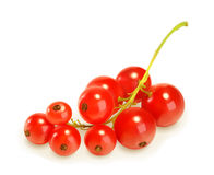 Redcurrant berries, vector illustration Stock Images