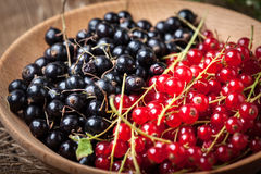 Redcurrant and blackcurrant in bowl. Stock Images