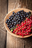 Redcurrant and blackcurrant in bowl. Stock Photos