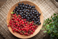 Redcurrant and blackcurrant in bowl. Royalty Free Stock Photo