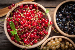 Redcurrant, blackcurrant, white currant fruit. Royalty Free Stock Photography