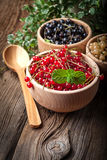 Redcurrant, blackcurrant, white currant fruit. Stock Images